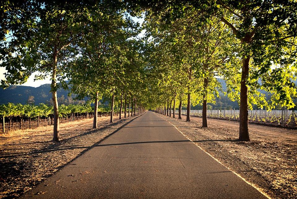 Napa Valley, Vineyards, Farm Rural, Landscape, Fields